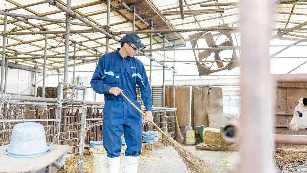 酪農の仕事でしっかり稼げる